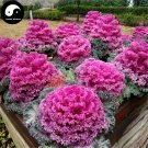 Buy Brassica Oleracea Vegetables Seeds 120pcs Plant Flower Cabbage