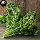 Buy Brassica Oleracea Vegetables Seeds 60pcs Plant Green Leaf Vegetable Cabbage