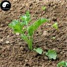 Buy Brassica Oleracea Vegetables Seeds 30pcs Plant Green Leaf Vegetable Cabbage
