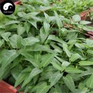Buy Spinach Vegetables Seeds 600pcs Plant Green Leaf Vegetable Spinach