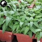 Buy Spinach Vegetables Seeds 150pcs Plant Green Leaf Vegetable Spinach