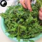 Buy Capsella Bursa-pastoris Herb Vegetables Seeds 600pcs Plant Wild Vegetable Ji Ji Cai