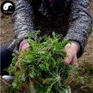 Buy Capsella Bursa-pastoris Herb Vegetables Seeds 150pcs Plant Wild Vegetable Ji Ji Cai