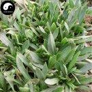 Buy Silene Conoidea Herb Vegetables Seeds 240pcs Plant Wild Vegetable Silene Conoidea