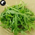 Buy Eruca Sativa Herb Vegetables Seeds 150pcs Plant Wild Vegetable Eruca Sativa
