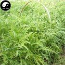 Buy Eruca Sativa Herb Vegetables Seeds 600pcs Plant Wild Vegetable Eruca Sativa