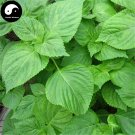 Buy Perilla Herb Vegetables Seeds 600pcs Plant Wild Vegetable Green Leaf Basil