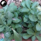 Buy Sedum Aizoon Herb Vegetables Seeds 400pcs Plant Wild Vegetable High Calcium