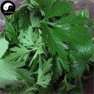 Buy Leonurus Artemisia Herb Vegetables Seeds 400pcs Plant Wild Vegetable Motherwort Yi Mu Cao
