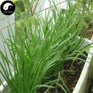 Buy Garlic Chives Seeds 400pcs Plant Spices Vegetables White Root Leek