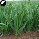 Buy Garlic Chives Seeds 200pcs Plant Spices Vegetables White Root Leek