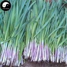 Buy Garlic Chives Seeds 200pcs Plant Spices Vegetables Purple Root Leek