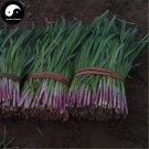Buy Garlic Chives Seeds 800pcs Plant Spices Vegetables Purple Root Leek
