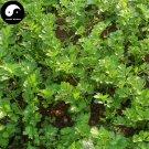 Buy Cilantro Seeds 400pcs Plant Spices Vegetables Parsley Coriandrum Sativum