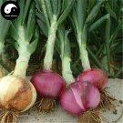 Buy Allium Cepa Seeds 300pcs Plant Spices Vegetables Onions Yang Cong