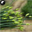 Buy Root Leek Seeds 400pcs Plant Spices Vegetables Parsley Garlic Chives