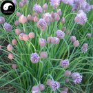 Buy Chives Seeds 200pcs Plant Spices Vegetables Allium Schoenoprasum