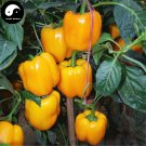 Buy Yellow Sweet Pepper Seeds 400pcs Plant Bell Pepper Vegetables Capsicum