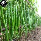Buy Green Long Pepper Seeds 600pcs Plant Hot Chili Vegetables Capsicum