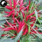 Buy Red Pepper Seeds 600pcs Plant Hot Chili Vegetables Capsicum Chao Tian Jiao