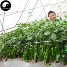 Buy Green Sweet Pepper Seeds 400pcs Plant Cow Bell Pepper Vegetables Capsicum