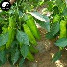 Buy Green Sweet Pepper Seeds 200pcs Plant Cow Bell Pepper Vegetables Capsicum