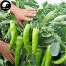 Buy Green Sweet Pepper Seeds 400pcs Plant Yang Bell Pepper Vegetables Capsicum