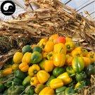 Buy Color Sweet Pepper Seeds 100pcs Plant Bell Pepper Vegetables Hot Pepper