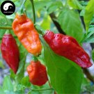 Buy Hot Chili Seeds 120pcs Plant Bhut Jolokia Vegetables Pucker Butt Pepper