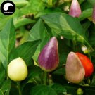 Buy Color Ornamental Pepper Seeds 100pcs Plant Garden Pepper