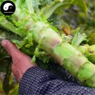 Buy Red Lettuce Vegetable Seeds 400pcs Plant Chinese Lactuca Sativa Wo Ju