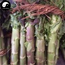 Buy Red Lettuce Vegetable Seeds 100pcs Plant Chinese Lactuca Sativa Wo Ju