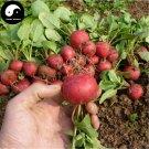 Buy Cherry Radish Vegetable Seeds 300pcs Plant Fruit Red Radish