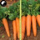 Buy Red Carrot Vegetable Seeds 1200pcs Plant Daucus Carota Garden