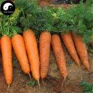 Buy Red Carrot Vegetable Seeds 600pcs Plant Daucus Carota Garden