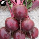Buy Beta Vulgaris Vegetable Seeds 800pcs Plant Root Vegetables Red Sugar Beet