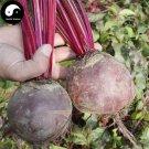 Buy Beta Vulgaris Vegetable Seeds 400pcs Plant Root Vegetables Red Sugar Beet