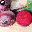 Buy Beta Vulgaris Vegetable Seeds 200pcs Plant Root Vegetables Red Sugar Beet