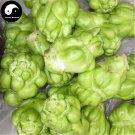 Buy Brassica Juncea Vegetable Seeds 800pcs Plant Root Vegetables Mustard Buds