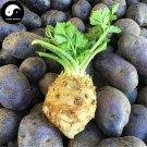 Buy Root Cilantro Vegetable Seeds 100pcs Plant Parsley Vegetables Coriandrum Sativum