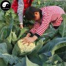 Buy White Cauliflower Vegetable Seeds 800pcs Plant Rare Broccoli Vegetables