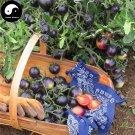 Buy Purple Cherry Tomatoes Vegetable Seeds 800pcs Plant Fruit Cherry Tomatoes