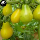 Buy Yellow Pear Tomatoes Vegetable Seeds 400pcs Plant Chinese Fruit Tomatoes