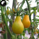 Buy Yellow Pear Tomatoes Vegetable Seeds 200pcs Plant Chinese Fruit Tomatoes