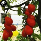 Buy Red Pear Tomatoes Vegetable Seeds 800pcs Plant Chinese Fruit Tomatoes