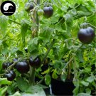 Buy Black Tomatoes Vegetable Seeds 200pcs Plant Chinese Fruit Tomatoes