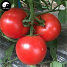 Buy Tomatoes Vegetable Seeds 1200pcs Plant Chinese Fruit Big Red Tomatoes