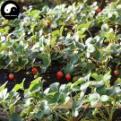 Buy Red Milk Strawberry Fruit Seeds 400pcs Plant Chinese Fruit Strawberries
