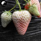 Buy White Milk Strawberry Fruit Seeds 300pcs Plant Chinese Fruit Strawberries