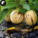 Buy Melon Eggplant Fruit Seeds 30pcs Plant Ginseng Fruit Solanum Muricatum Aiton